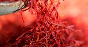 Saffron of Afghanistan